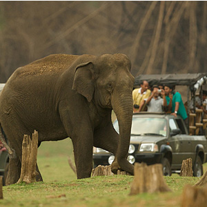 Kabini resorts